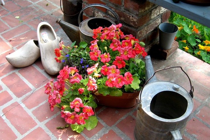 A well - worn pair of klompen, now retired to the duty of just sitting by this flowering Petunia & galvinized cans.