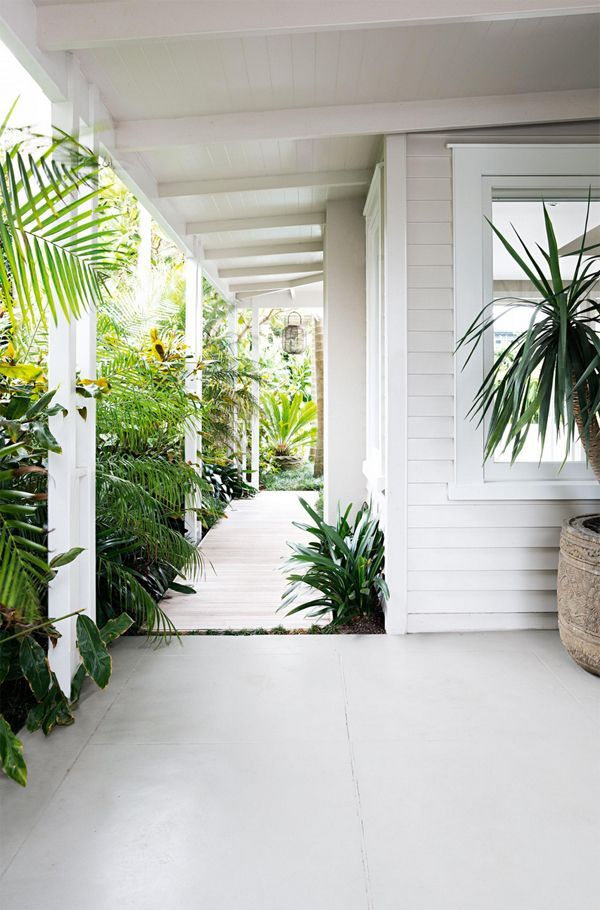 palms//tropicana
