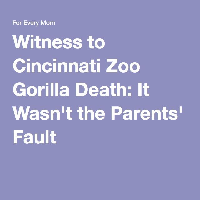 Witness to Cincinnati Zoo Gorilla Death: It Wasn't the Parents' Fault