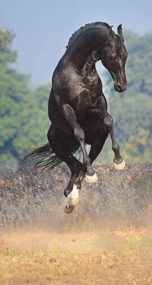 Jumping For Joy. Happy horse!