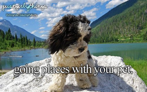 going places with your pets #justgirlythings