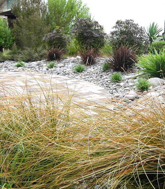 Modren Native Garden Ideas Nz Plants New Zealand Plant