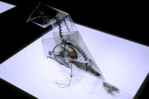 This transparent animal skeleton origami aims to raise awareness about the changing habitats of endangered species of Japan.