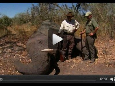 NBC cancels hunting show after NRA lobbyist shoots elephant in face, compares critics to Hitler