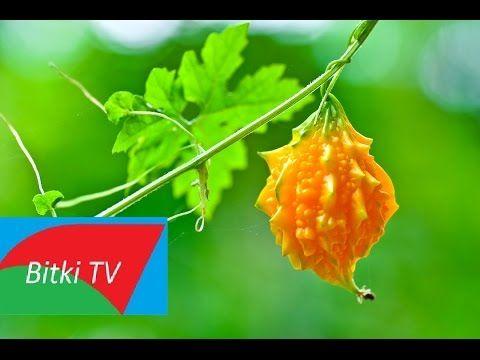 Kudret Narı Nedir ? Hangi Hastalıklara İyi Gelir - Bitki TV