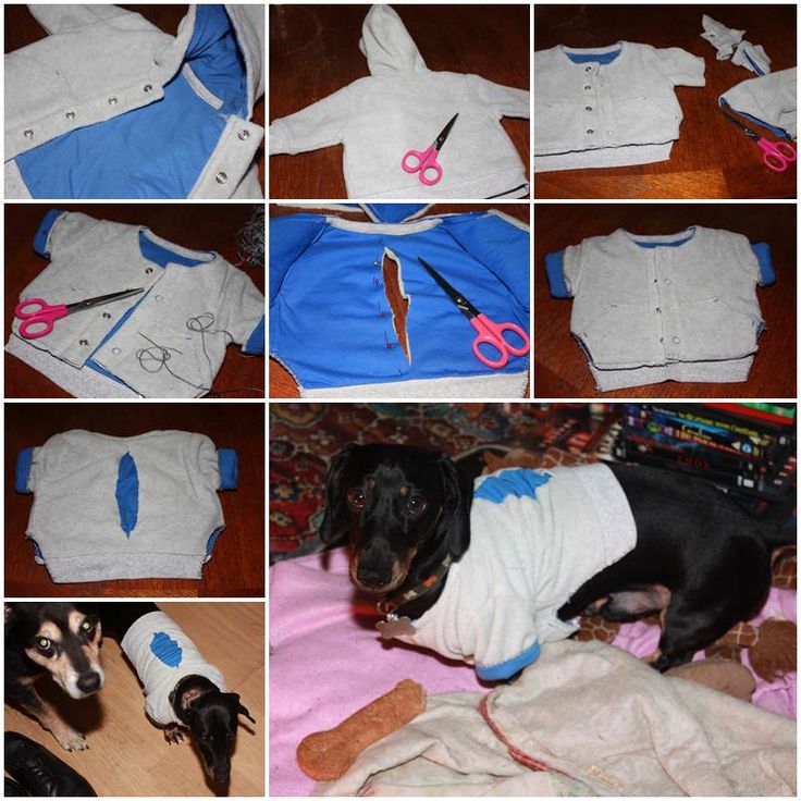 17 best images about dog happenings on pinterest for How to make a shirt for your dog
