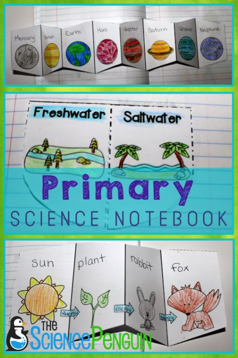 Primary Science Notebook-- activities for food chains, water, planets, life cycles, 5 senses, rocks, moon phases, plants, magnetism, matter, and more! $| The Science Penguin