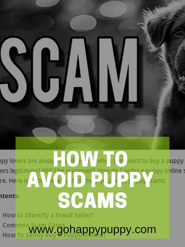 How To Avoid Puppy Scams The Complete Guide Dog Food Online