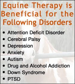 8 Disorders and 3 Activities that Equine Therapy Benefits