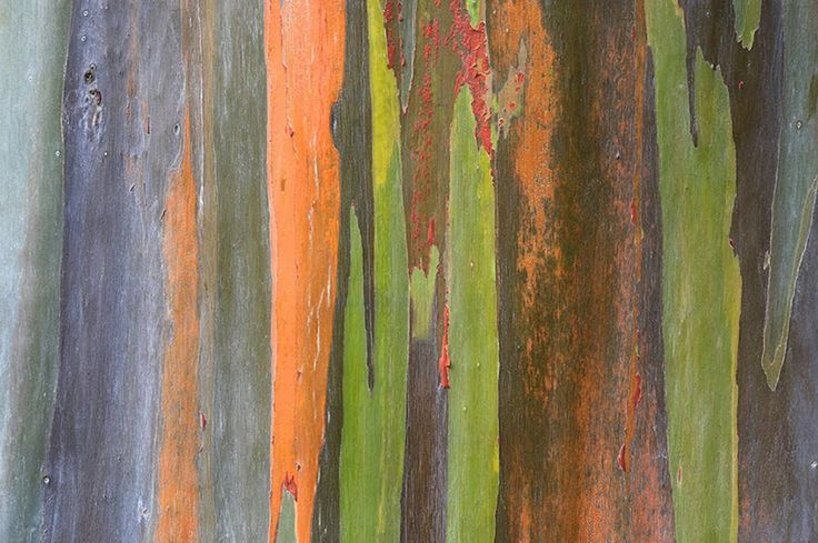 PEM | Branching Out: Trees as Art « Exhibits
