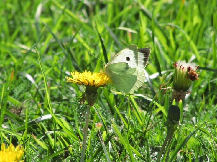 Una foto tomada en un día de otoño, en la ciudad de Osorno, época en que las mariposas acompañaban mi caminar bajo el sol