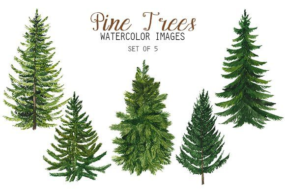 Watercolor Pine Trees Clipart Watercolor Trees Tree Clipart