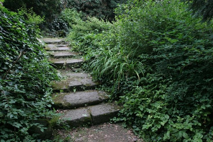 Koch Garden, Partizanska (June 2008)