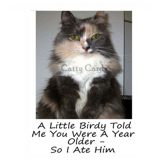 Karma The Cat Ate That Little Bird That Wanted To Wish You A Happy Birthday. Join All The Gang