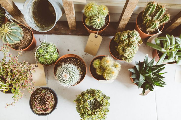 Light . Water . Temperature . How to look after succulents.