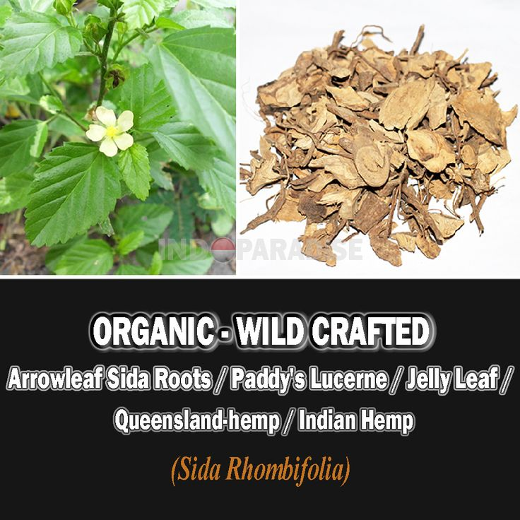 Roots are considered febrifuge, cooling, astringent, tonic, hepatoprotective, antibacterial, anti-inflammatory and antioxidant. Diarrhea, tuberculosis, arthritis, anti-anxiety, digestion, toothaches, stomachic, sore breasts, bronchitis, asthma, constipation, etc. #SidaRhombifolia #DriedHerbs #HerbalRemedies #HerbalMedicine