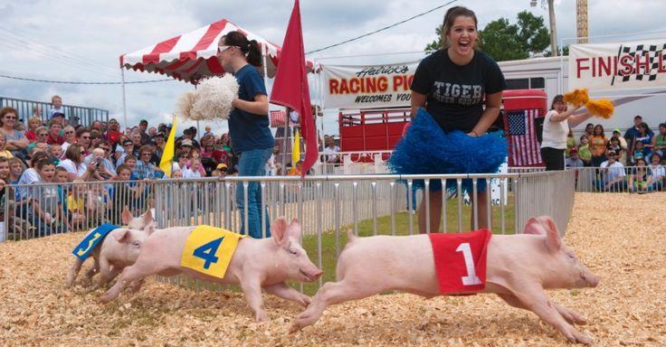 Raças de porcos são a atração da feira nacional de Kansas, em Hutchinson (EUA), junto com cachorros quentes e competições de gado. O Meio-Oeste americano é o coração das feiras nacionais - um ritual que marca o fim do verão. Como os porcos, as feiras não mudam muito com o passar do tempo