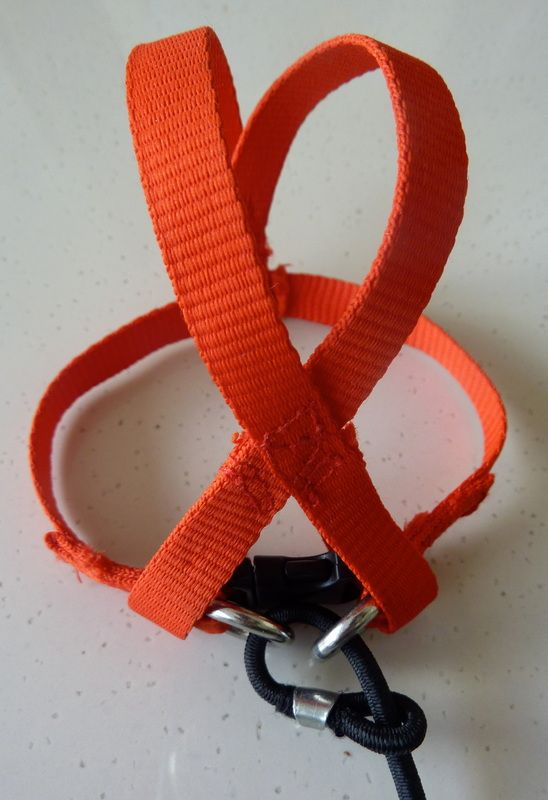 I started making harnesses for my birds after I used the ...