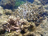 石垣島・白保の海で重度の赤土汚染|サンゴ礁の保全活動|WWFジャパン