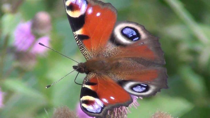Бабочка в высоком разрешении. Butterfly in high resolution.