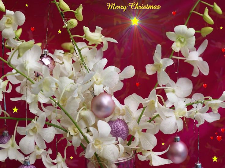 Latest Desktop Backgrounds & Images for Christmas & New Year