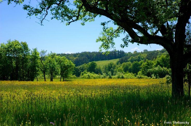 Flowery Field, Őrség