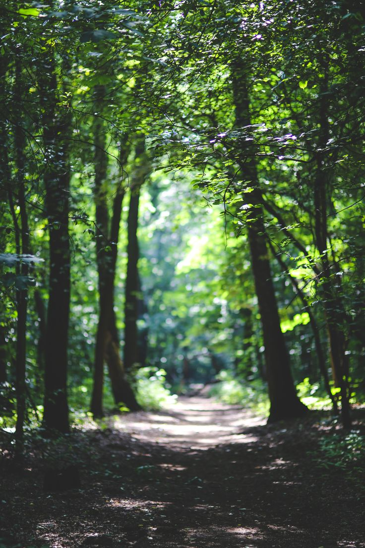 nature-forest-trees-path.jpg (3612×5418)