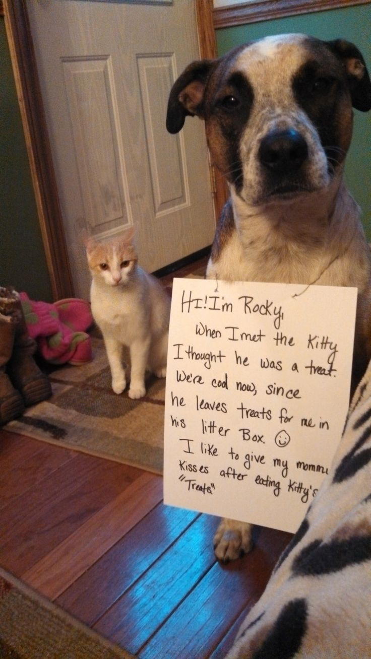 52 best confessions of a dog images on pinterest | funny stuff