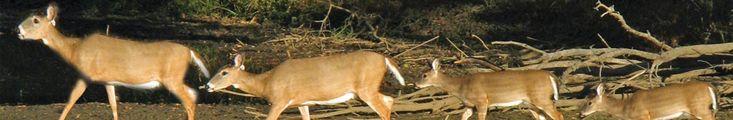 Benefits Of Using Deer & Wild Game Rinse