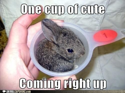 17 Best images about Rabbits!!!! on Pinterest | Buns, Pets ...