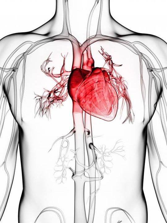 Καρδιακή Ανεπάρκεια  Η καρδιακή ανεπάρκεια είναι μια κατάσταση κατά την οποία η καρδιά δεν είναι πλέον σε θέση να αντλήσει αρκετό, πλούσιο σε οξυγόνο αίμα. Αυτό προκαλεί συμπτώματα που εμφανίζονται σε όλο το σώμα.  Αιτίες... Δείτε περισσότερα