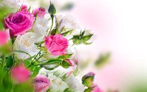 Wallpaper Bush, petals, roses, bouquet