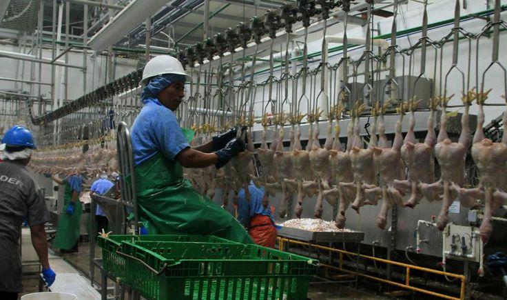 Honduras: Avícolas venderán huevo y carne a bajo costo en ferias  Calculan que venderán alrededor de 720 mil unidades de huevo y 100 mil libras de pollo durante todas las ferias que harán. La actividad agrícola creció un 10.4% el año pasado, según el Banco Central de Honduras.