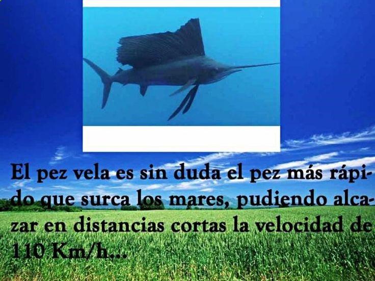 (͠≖ ͜ʖ͠≖)👌 Descubre Curiosidades Julio Verne, Notas Curiosas Los Cuarenta y Noticias Curiosas Submarinos aquí ➡➡ http://www.cienic.com/curiosidades-sobre-google-maps/