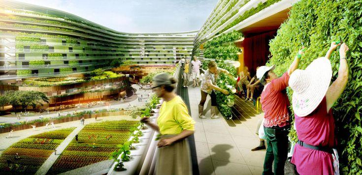 Si chiama Home Farm, il progetto di fattoria urbana che coinvolge gli ospiti di una casa di riposo, presentato dagli architetti della Sparck.