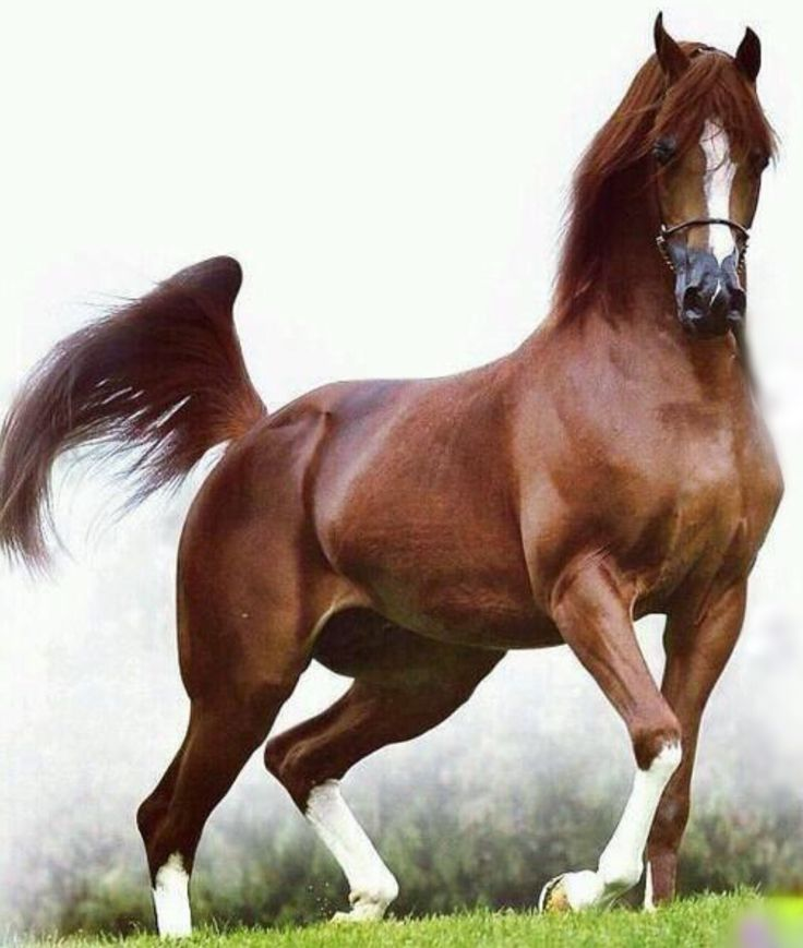 Pretty horse with silky smooth coat.