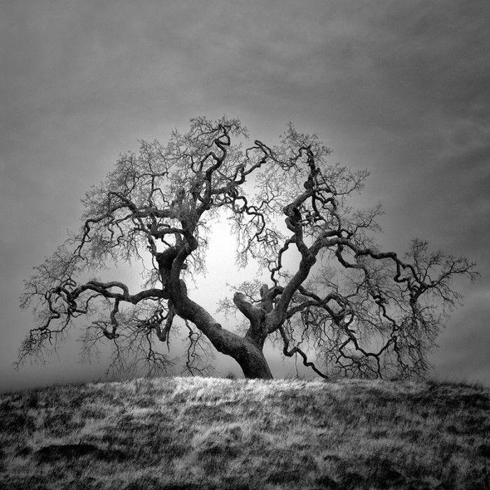 Alberi solitari nella California del nord fotografati all'infrarosso da Nathan Wirth