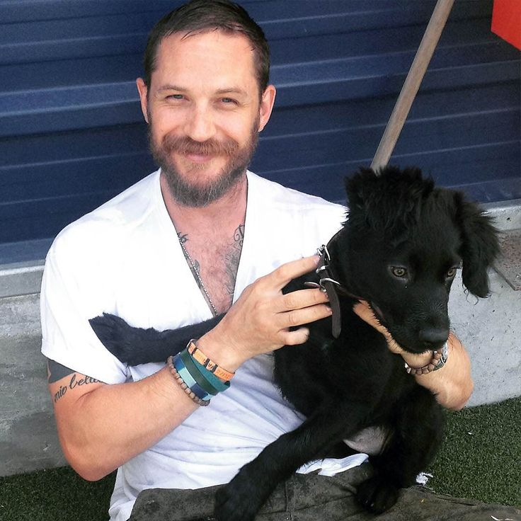Shared by @lousparktotti, a delightful closeup of this photo from Tom's visit last week to Battersea Dogs & Cats Home.  Travis hanging out with Tom Hardy #travisdawg #tomhardy