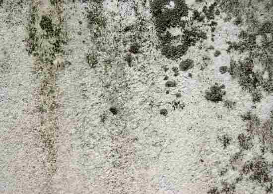 Is Mold In Bathroom Bad 102 best bad bad stuff/mold images on pinterest | remove mold