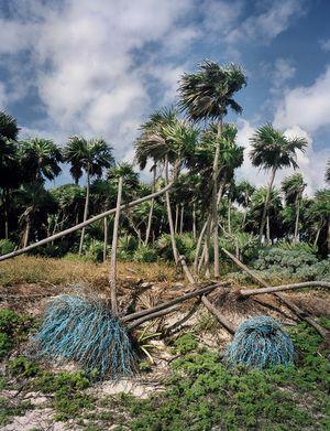 Alejandro Duran, Washed Up : Transforming a Trashed Landscape, Raíces (Roots), 2011