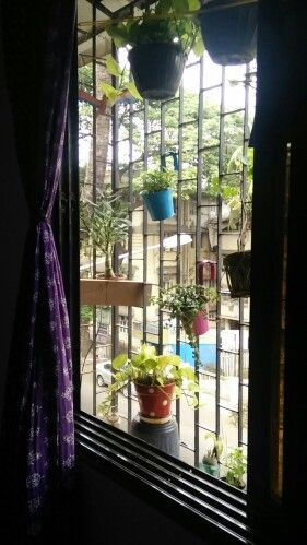 I wish I had a house with open wide balcony..but currently I have to be content with my window.. Greenery adds life to any space.. Big or small.. At least now I have a happy green window..plants can really do wonders..