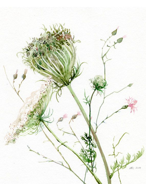 Impresión de GICLEE de encaje de la Reina Ana de acuarela original por A. Verbrugge, flores silvestres pintura