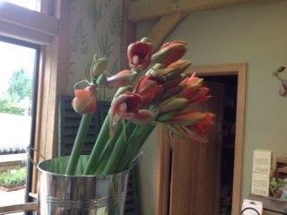 Flowers by Natasha Thomas at Long Barn