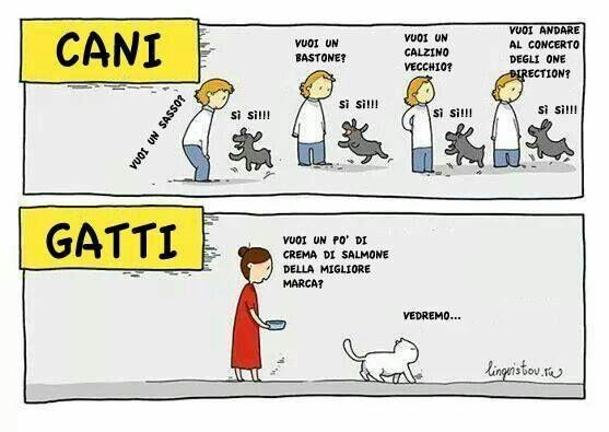 Gatti...