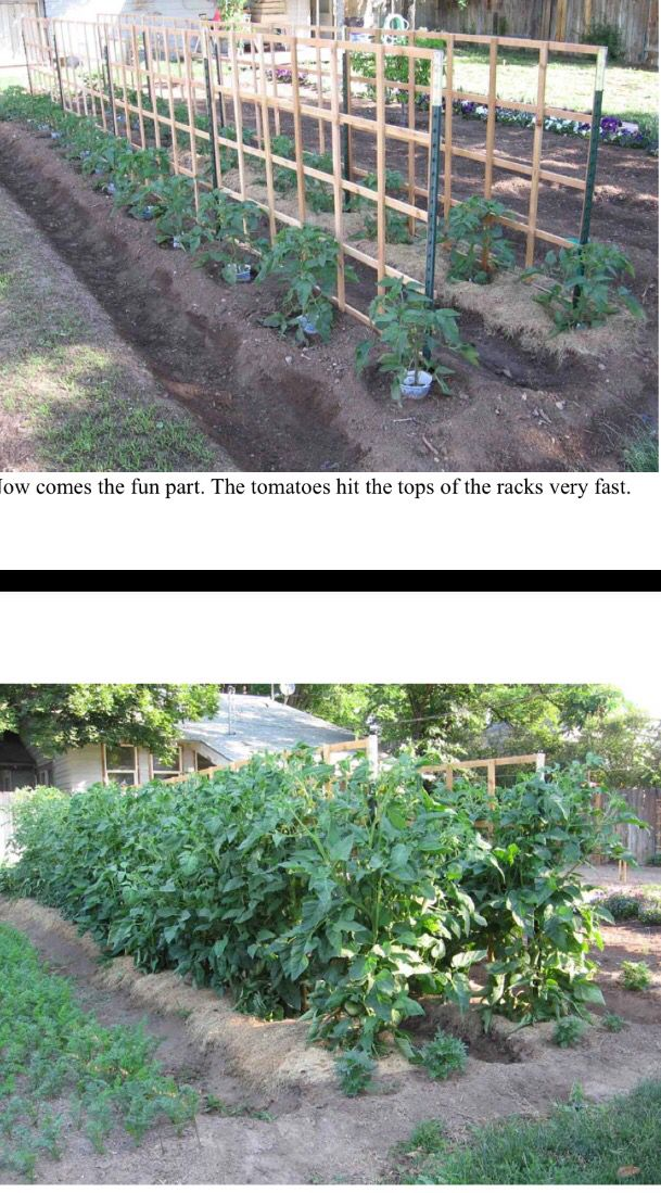 48 Best Images About Gardening In Wooden Raised Beds On Pinterest Raised Beds Harrods And