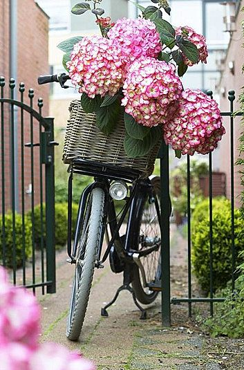 Bikes, Baskets and Flowers