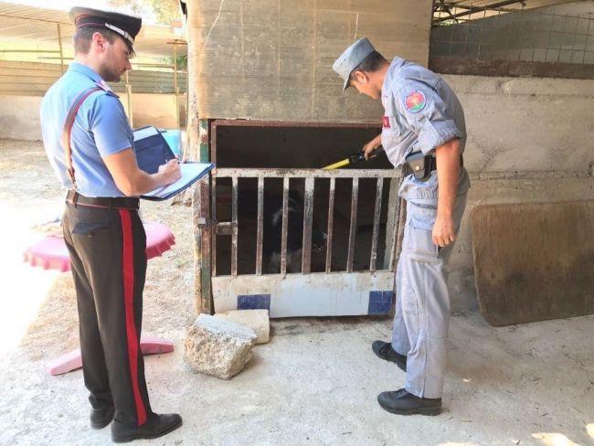 Carabinieri scoprono un canile abusivo