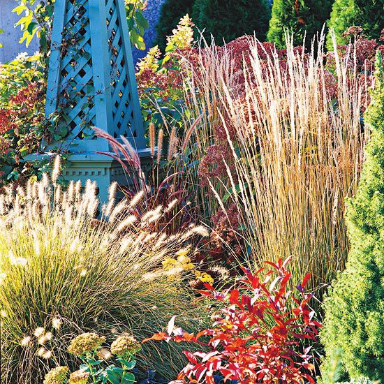The beauty of ornamental grasses ornamental grasses for Tall grass border
