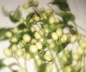 L'olio di neem a cosa serve?