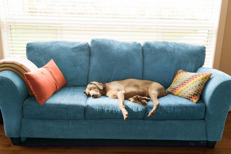 Die Besten 25 Haus Beseitigen Ger Che Ideen Auf Pinterest Hundegeruch Entfernen Haustier